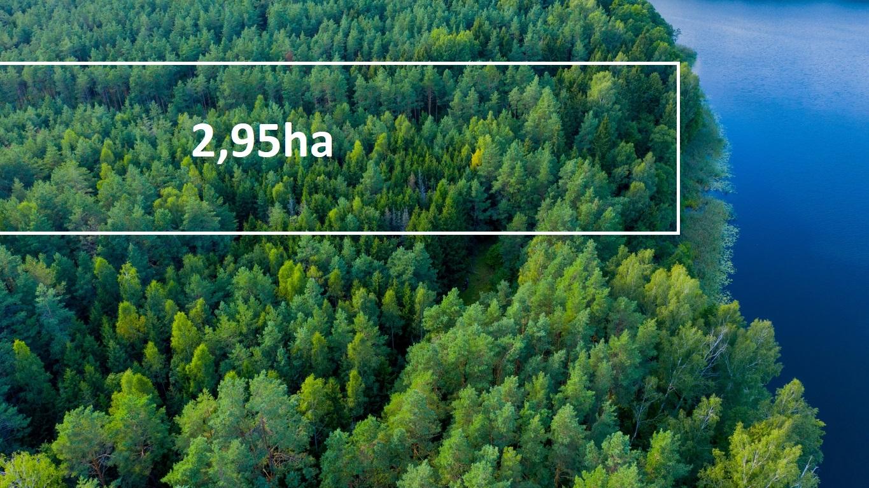 Las 2,95ha z bezpośrednim dostępem do jeziora Bolesty.